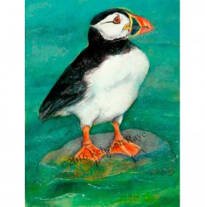 Puffin_standing